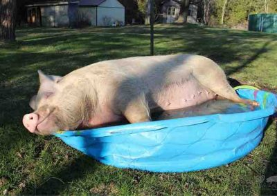 Esther's Pool