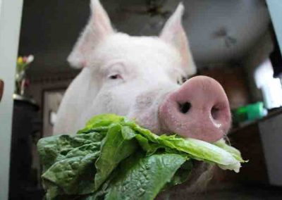 I'm vegan because I don't eat my friends. But I have no friends who are lettuces.