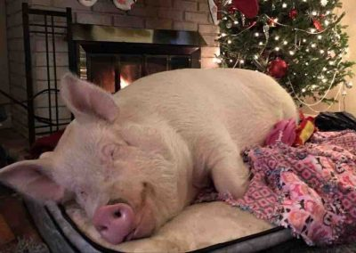 Who needs Santa when you have the gift of sleep.