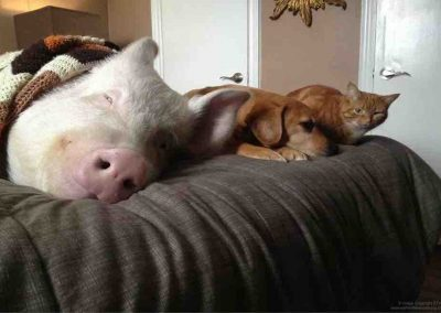 Snoozing with My Family