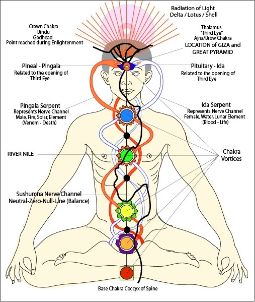 The chakras are points within the body where 'Kundalini energy' - which flows from the base chakra at the bottom of the spine to the top of the head - connects with the Nadi energy channels that spiral up and down through the body, intersecting the Kundalini line as the go.